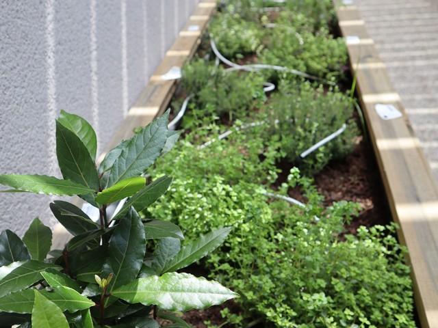MAISON GRIZLAW Plantes aromatiques